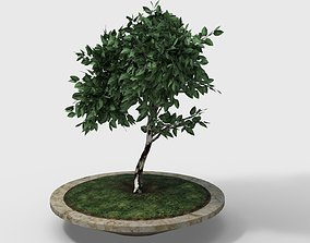 small tree in pot - PBR Game-Ready 3D asset