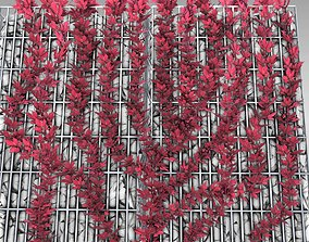Wild Wine Vine - Autumn - on Gabion Wall 3D model 2