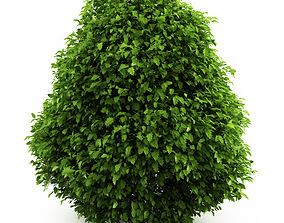 3D Common Holly Ilex aquifolium 44736
