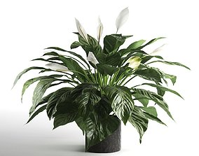 Peace Lily in Pot 2 3D