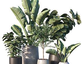 3D Plant set 04