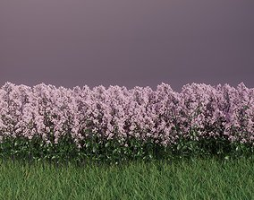 Flowering High Poly Oregano for FREE 3D