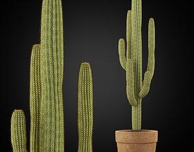 3D model Plants collection 253