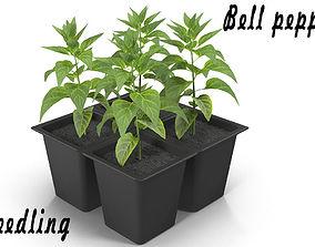 Seedlings of bell pepper 3D asset