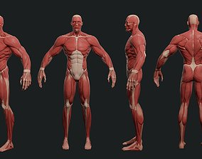 Stylazed Superhero anatomy 3D model