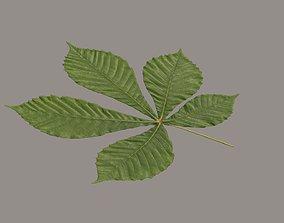 Leaf chestnut 3D model