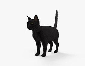Black Cat HD 3D model