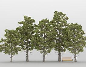 3D model Pine Tree Pack 01