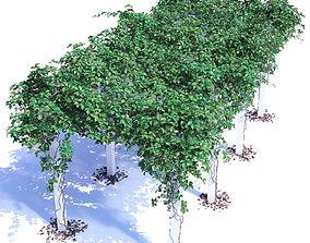 Parthenocissus vitacea-3 3D model
