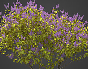 3D 2021 PBR Common Lilac Collection - Syringa Vulgaris