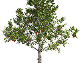 Red Delicious Apple Tree 3D asset