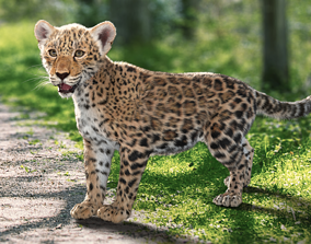 3D model Panthera onca Baby leopard Animated
