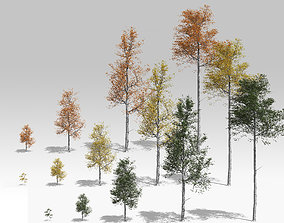 Seasonal Quaking Aspen Model in Multiple Growth Stages