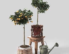 Orange Trees set 02 3D model