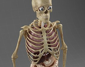 3D model Anatomy Internal Organs Male