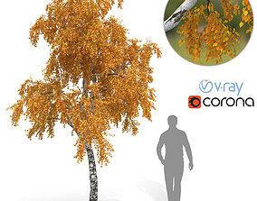 Birch Tree No 3 Autumn Version 3D model
