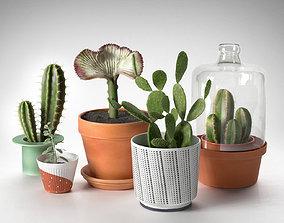lactea 3D model Cactus Plants in Pots