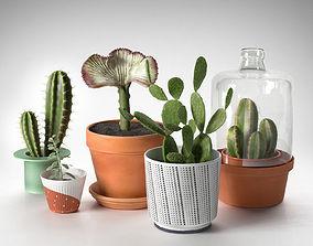 3D model Cactus Plants in Pots
