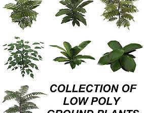 Tropical Plant Collection 3D asset