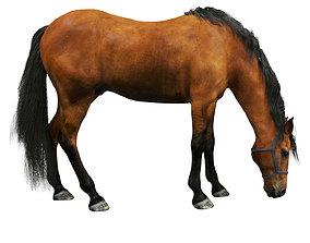 3D Horse halter