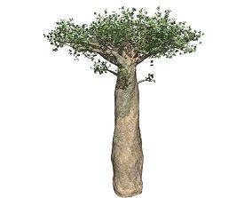 af Baobab 3D