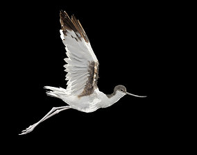 Realistic Avocet bird model with feather and hair