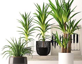 3D model House plants 1