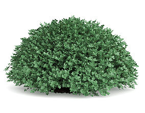 3D Round Boxwood Plant Buxus sempervirens