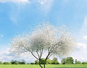 Magnolia 032 v3 AM136 3D