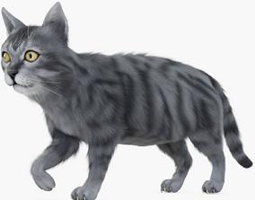 3D asset Cat Brown Rigged