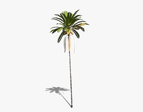 3D model animated Coconut Palm Tree 30505