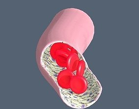 3D model Capillary vessel containing red blood cells and 1