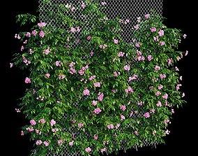 3D model Rose plant set 35