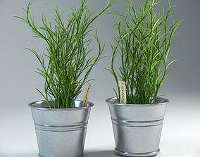 3D model Rosemary