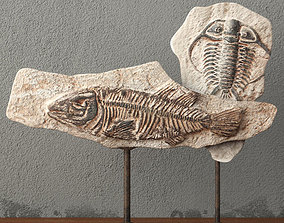 Fossils on Stand 3D model