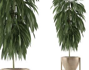 3D model Single Plant 13