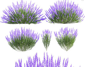 Lavandula Lavender 3D model lily