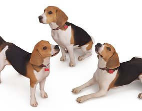 collection Beagle Collection 3D model