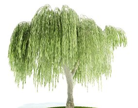3D model willow Weeping Willow Tree