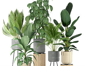 Plants collection 213 3D