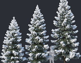 3D model Spruce Nr4 Three sizes H430-650cm Modular 1