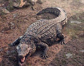 Realistic crocodile high res 3D
