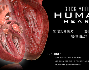 3D model low-poly PBR Human Heart