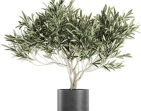 Decorative olive tree in a black flowerpots 732 3D