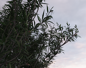 animated Olive Tree 3D Model