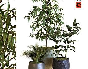 3D asset plant in box set 040