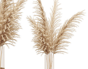 Dried flower pampas grass in glass gold vase 3D