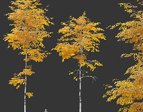 park Two autumn aspen tree 3D