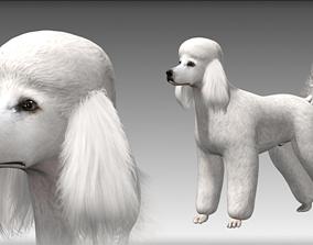 Poodle Big Dog 3D