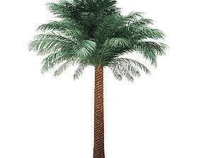 Silver Date Palm Tree 3D Model 5m